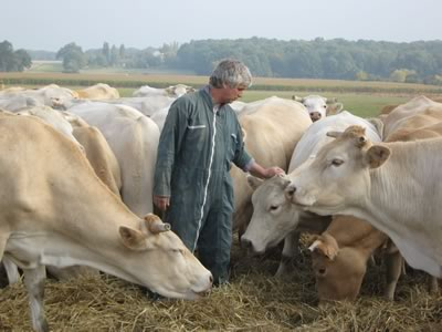 grandmaison,vente,drecte,bovin,viande,bovine,veau,vache,porc,charcuterie,balade,gout